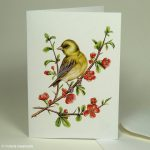 greenfinch bird card