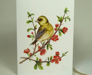 greenfinch bird card