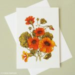 Orange Nasturtium Greeting Card